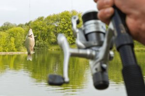 Man holding spinning reel with smallmouth bass hooked.